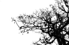 Tree branches isolated Royalty Free Stock Photography