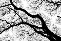 Tree branches Stock Image