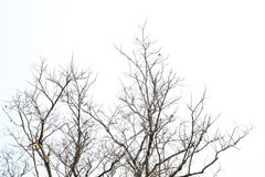 Tree branches isolated on  white background Royalty Free Stock Photos