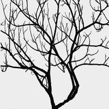 Tree branches isolated on white background Stock Image