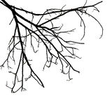 Tree branches isolated on white background Stock Photo