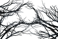 Tree branches isolated  on white. Twisted tree branches isolated  on white Stock Photos