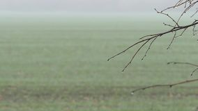 Tree branches without leaves in the autumn day. Fog over the autumn field after the rain stock footage