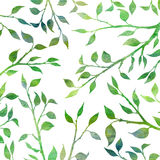 Tree branches with leaves Royalty Free Stock Photos