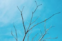 Tree branches without leaves on blue sky background. stock images
