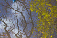 Tree, branches, leaves reflection in the puddle. Abstract, artistic concept Royalty Free Stock Images
