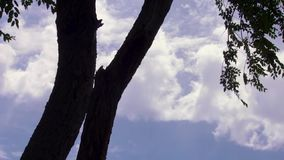 Tree branches and leaves. Silhouette of an tree branches and leaves blowing in the wind with nice cloudscape and blue sky stock video footage