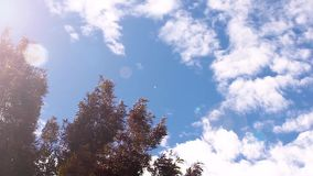 Tree branches and leaves. Blowing in the wind with nice sun flare stock video footage