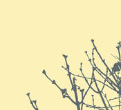 Tree branches on light yellow background Royalty Free Stock Photo