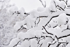 Tree branches loaded with snow after heavy snowfall Royalty Free Stock Images