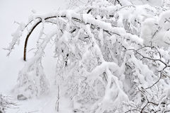 Tree branches loaded with snow after heavy snowfall Royalty Free Stock Photos