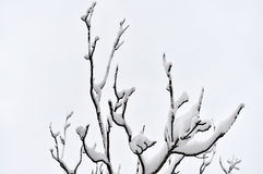 Tree branches loaded with snow after heavy snowfall Stock Photos