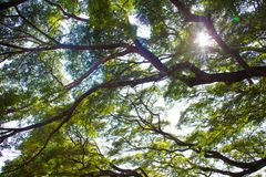 Tree branches looking up with green leaves and blue sky royalty free stock images