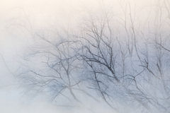Tree Branches in Mist Stock Images