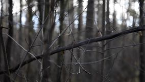 Tree branches in misty cold morning stock video footage