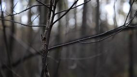 Tree branches in misty cold morning stock footage