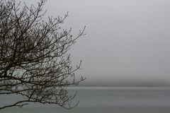 Tree branches and misty lake stock photos
