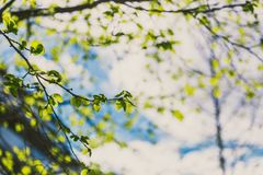 Tree branches with modern building in the background Royalty Free Stock Image