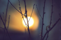 Tree branches and the moon Royalty Free Stock Photos