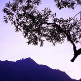 Tree branches and mountain silhouette Royalty Free Stock Photo
