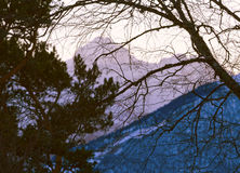 Tree branches mountains Stock Photography