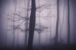 Tree with branches in mysterious forest with fog Royalty Free Stock Photos