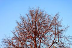 Tree branches with nest on blue sky background stock photography