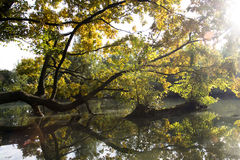 Tree branches over the water Stock Image