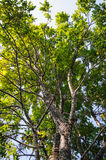 Tree branches. Pattern of  green tree branches Royalty Free Stock Photography
