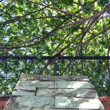 Tree branches. A picture of tree branches over the wall Stock Image