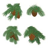 Tree branches with pine cones. Vector collection of Christmas tree branches with pine cones Royalty Free Stock Image