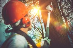 Tree Branches Pro Cutting. Unsafe Branches Removal by Extended Wood Cutter Royalty Free Stock Photo