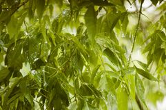Tree branches in the rain. Close-up stock images