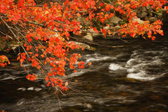 Tree branches and red leaves above flowing river Stock Images