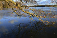 Tree branches reflected in the water Stock Photo