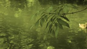 Tree branches reflected in the water stock footage