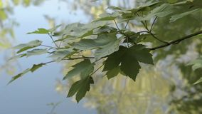 Tree branches reflected in the water stock video footage