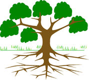 Tree, Branches, Root, Eco, Ecology Stock Photography