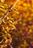 Tree branches scene on a fall day stock photo