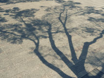 Tree Branches shadow Nature Abstract background Royalty Free Stock Photo