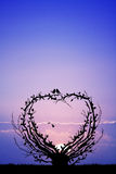 Tree with branches in the shape of heart Stock Photography