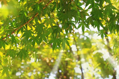 Tree branches shined with the sun Royalty Free Stock Photos