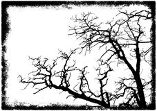 Tree branches silhouette Royalty Free Stock Photo
