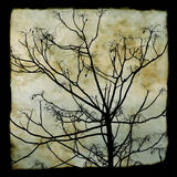 Tree branches silhouette Stock Photos