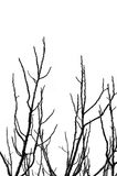 Tree branches silhouette Royalty Free Stock Photos