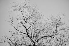 Tree branches silhouette against clear sky. Black and white background. Abstract symbol concept. With place for your Royalty Free Stock Photos