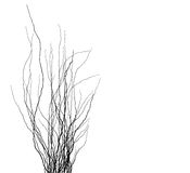 Tree branches silhouette in black over white Royalty Free Stock Photos