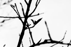 Tree branches silhouette Stock Image