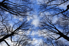 Tree branches in silhouette Royalty Free Stock Images