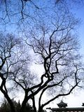 Tree Branches Silhouette in Clear Blue Sky Stock Images